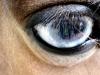 blue-oogmini