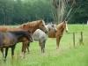 Lieve pony's in de wei
