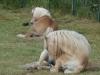 Een deel van onze pony's en ezel Patoe uit logeren in Malden!