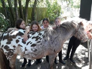 ponykamp foto